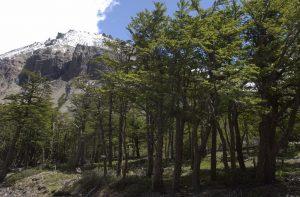 El rol de los bosques en atraer la lluvia