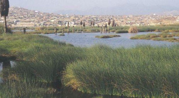 Despachan al Senado proyecto que busca asegurar Conservación de Humedales