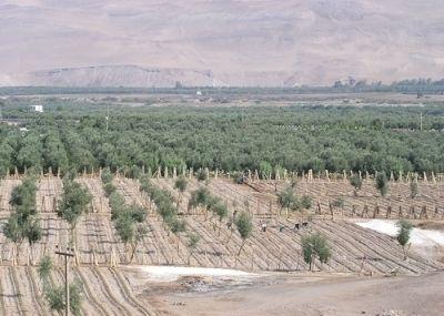 Déficit de agua en el valle de Azapa incide en la disponibilidad de terrenos agrícolas
