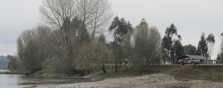 Millonaria multa a empresa de extracción de áridos que modificó curso de río Calle Calle