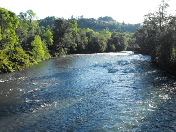 Comisión de Evaluación Ambiental Rechazó Proyecto hidroeléctrico Doña Alicia en Curacautín