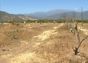 MOP decreta escasez hídrica en la provincia de Petorca