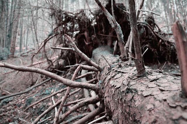 La industria forestal y la muerte del bosque nativo en Chile: Un modelo para secar al país