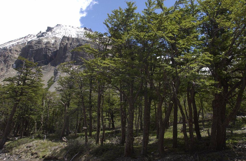 Los bosques son una pieza clave en el cambio climático