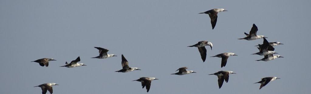 CODEFF realiza diversas actividades en el marco del Día de las Aves