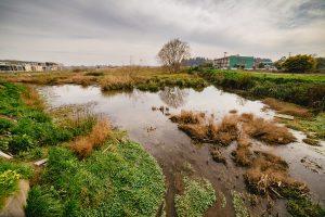 Cuidamos los humedales urbanos, pero ensuciamos el agua que reciben