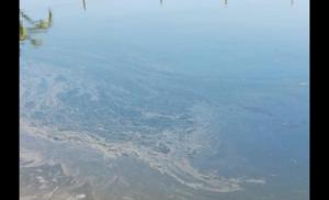 Regantes acusan vertido de hidrocarburos en canal Romeral y crece el temor